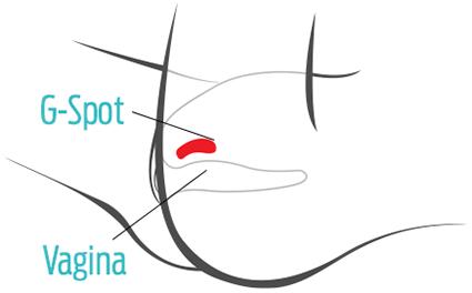 G-Spot Vagina